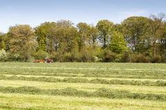 Colheita da grama da mola Imagens de Stock