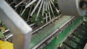 Colheita da máquina da groselha no movimento lento vídeos de arquivo