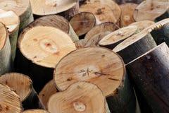 Colheita da madeira: Pilha de seções recentemente cortadas da árvore de faia Fotos de Stock