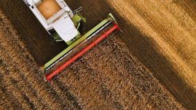 Colheita da opinião aérea do close-up do trigo no verão Ceifeira que trabalham no campo Ceifeira de liga agrícola filme
