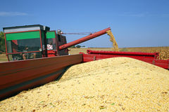 Colheita da soja Foto de Stock