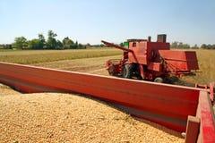Colheita da soja Imagens de Stock