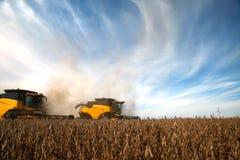 Colheita da soja Imagem de Stock