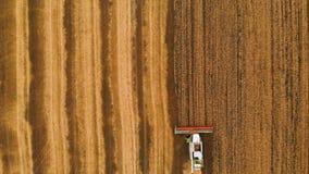 Colheita da vista aérea do trigo no verão Ceifeira que trabalham no campo Máquina agrícola da ceifeira de liga video estoque