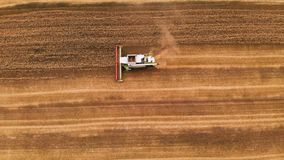 Colheita da vista aérea do trigo no verão Ceifeira que trabalham no campo Máquina agrícola da ceifeira de liga filme