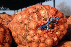 A colheita das cebolas no armazém Fotografia de Stock