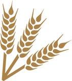 Colheita das orelhas do trigo ilustração do vetor