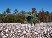 Colheita de algodão Foto de Stock Royalty Free