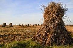 Colheita de Amish fotos de stock royalty free