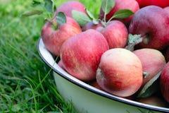 Colheita de Apple - role com as maçãs na grama Foto de Stock
