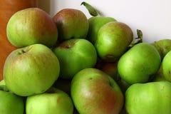 Colheita de Bramley Apple Imagem de Stock