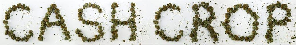 Colheita de dinheiro soletrada com marijuana Imagem de Stock