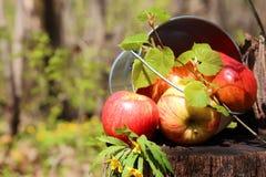 Colheita de maçãs e de peras vermelhas suculentas maduras em uma cubeta em um stum Imagens de Stock Royalty Free