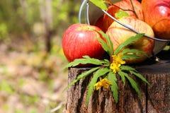 Colheita de maçãs e de peras vermelhas suculentas maduras em uma cubeta em um stum Imagem de Stock