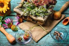 Colheita de plantas medicinais Fotografia de Stock