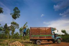 Colheita do caminhão da mandioca-acima Foto de Stock Royalty Free