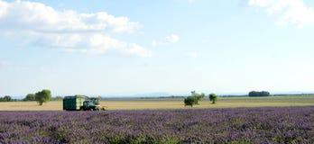 Colheita do campo da alfazema em Provence, perto de Valensole, França Imagens de Stock