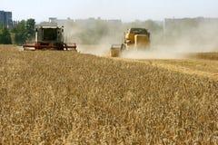 Colheita do campo de trigo Fotografia de Stock