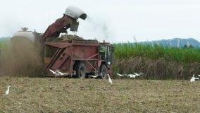 Colheita do cana-de-açúcar vídeos de arquivo