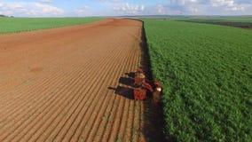 Colheita do cana-de-açúcar no dia ensolarado em Brasil - Canavial filme