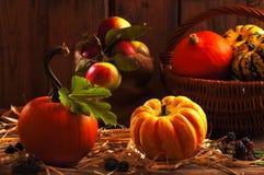 Colheita do Gourd Imagem de Stock Royalty Free
