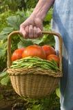 Colheita do jardim Imagens de Stock Royalty Free