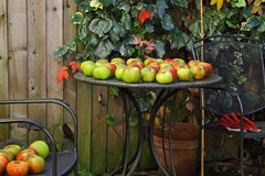Colheita do jardim do outono Fotos de Stock Royalty Free