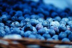 Colheita do mirtilo no verão tão delicioso e nutritivo! imagem de stock