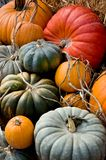 Colheita do outono Foto de Stock Royalty Free
