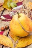 Colheita do outono da pera Foto de Stock