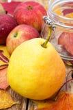 Colheita do outono da pera Imagem de Stock Royalty Free