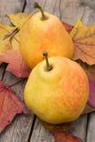 Colheita do outono da pera Fotos de Stock