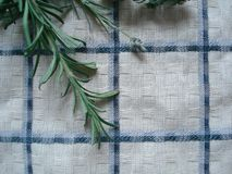 Colheita do outono das ervas aromáticas e medicinais Tiros do verde das plantas: alfazema, orégano, alecrins, como um aditivo par Fotos de Stock Royalty Free