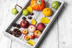 Colheita do outono das frutas e verdura Fotos de Stock