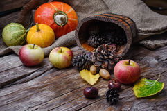 Colheita do outono das maçãs e das abóboras Fotos de Stock