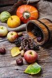 Colheita do outono das maçãs e das abóboras Foto de Stock