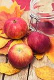 Colheita do outono de Apple Imagem de Stock