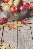 Colheita do outono e fundo do cartão da ação de graças Foto de Stock