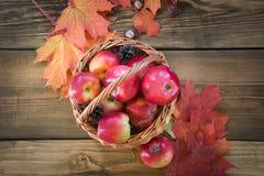 Colheita do outono, maçãs na cesta, folhas de outono coloridas na placa de madeira Da queda vida ainda, fim acima Vista superior Fotografia de Stock