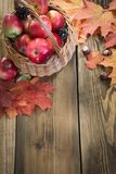 Colheita do outono, maçãs na cesta, folhas de outono coloridas na placa de madeira Da queda vida ainda Vista superior Imagem de Stock