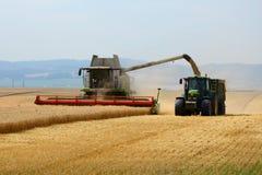 Colheita do trigo Foto de Stock