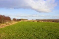 Colheita do trigo e terra cênico Imagens de Stock Royalty Free