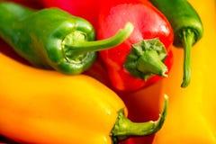 Colheita do verão as pimentas doces recentemente escolheu, do vermelho, as verdes e as amarelas, colocando na grama no jardim Foto de Stock