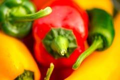 Colheita do verão as pimentas doces recentemente escolheu, do vermelho, as verdes e as amarelas, colocando na grama no jardim Imagem de Stock Royalty Free