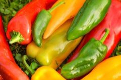 Colheita do verão as pimentas doces recentemente escolheu, do vermelho, as verdes e as amarelas, colocando na grama no jardim Imagens de Stock Royalty Free