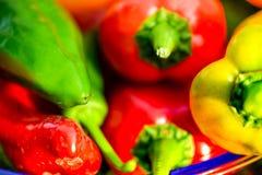 Colheita do verão as pimentas doces recentemente escolheu, do vermelho, as verdes e as amarelas, colocando na grama no jardim Foto de Stock Royalty Free