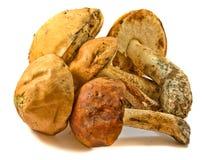 Colheita dos cogumelos Imagens de Stock Royalty Free