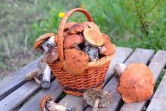 Colheita dos cogumelos na cesta marrom no close up de madeira da tabela Fotos de Stock