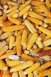 Colheita dos grãos Foto de Stock