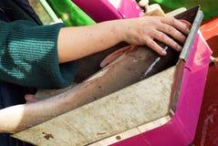 Colheita dos peixes Imagem de Stock Royalty Free